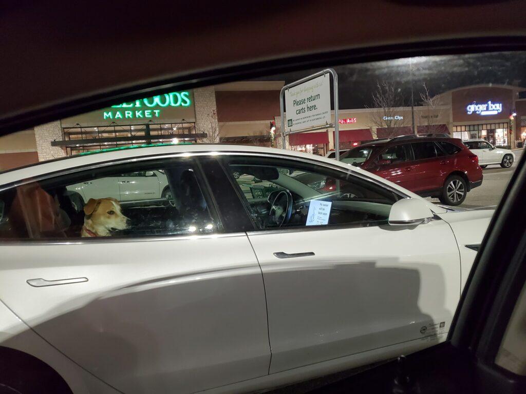 modo perro